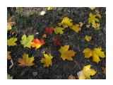 Название: на асфальте  Фотоальбом: 2008 10 17 Осень в Южном Категория: Природа Фотограф: vikirin  Время съемки/редактирования: 2008:10:17 13:25:03 Фотокамера: Canon - Canon PowerShot SX100 IS Диафрагма: f/4.5 Выдержка: 1/1250 Фокусное расстояние: 6000/1000 Светочуствительность: 200   Просмотров: 4850 Комментариев: 0