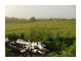 В Комрво лежит скелет касатки Фотограф: vikirin  Просмотров: 2523 Комментариев: 0