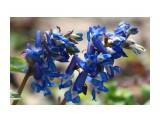 Первое весеннее цветение... Фотограф: vikirin  Просмотров: 1658 Комментариев: 0