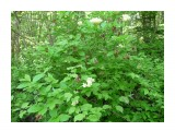 Природа Сахалина. Неизвестный цветок с коробочками! Фотограф: viktorb окр. Южно-Сахалинска, г. Городуха!  Просмотров: 957 Комментариев: 0