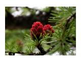 IMG_9266 Фотограф: vikirin  Просмотров: 625 Комментариев: 0