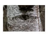 Лес смотрел на нас оком безпристрастным... Фотограф: vikirin  Просмотров: 1940 Комментариев: 0