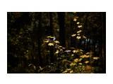 Название: _DSC9309 Фотоальбом: Осень Категория: Природа Фотограф: VictorV  Время съемки/редактирования: 2018:10:18 20:55:43 Фотокамера: SONY - DSLR-A900 Диафрагма: f/2.8 Выдержка: 1/2000 Фокусное расстояние: 1000/10    Просмотров: 249 Комментариев: 0