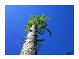 Деревья (Сильная штука жизнь) Фотограф: alexei1903  Просмотров: 1506 Комментариев: 0
