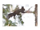 Ходьба по воздуху ) Фотограф: VictorV  Просмотров: 333 Комментариев: 2
