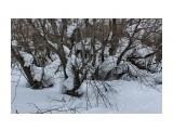 А где-то снега не хватает... Фотограф: vikirin  Просмотров: 825 Комментариев: 0