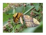 Название: Gandaritis fixseni Фотоальбом: Бабочки Категория: Макросъёмка  Время съемки/редактирования: 2015:08:31 16:50:40 Фотокамера: Canon - Canon EOS 550D Диафрагма: f/5.6 Выдержка: 1/1600 Фокусное расстояние: 135/1    Просмотров: 543 Комментариев: 0