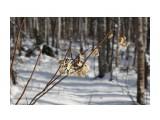Название: IMG_4345 Фотоальбом: Зимний лес Категория: Природа Фотограф: Region_65  Время съемки/редактирования: 2012:12:01 17:11:48 Фотокамера: Canon - Canon EOS 50D Диафрагма: f/8.0 Выдержка: 1/250 Фокусное расстояние: 60/1    Просмотров: 1000 Комментариев: 0