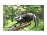 cat  Просмотров: 1615 Комментариев: