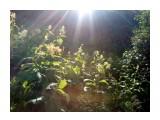 Солнечные лучи Фотограф: vikirin  Просмотров: 3134 Комментариев: 0