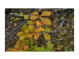 Название: DSC07291 Фотоальбом: Осень Категория: Природа Фотограф: VictorV  Время съемки/редактирования: 2020:10:28 22:46:11 Фотокамера: SONY - SLT-A99 Диафрагма: f/3.5 Выдержка: 1/1600 Фокусное расстояние: 500/10    Просмотров: 98 Комментариев: 0