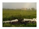 В Комрво лежит скелет касатки Фотограф: vikirin  Просмотров: 2378 Комментариев: 0