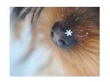 Название: Зима на носу :) Фотоальбом: Живности. Пёскины. Категория: Животные  Время съемки/редактирования: 2016:11:29 11:58:46    Просмотров: 42 Комментариев: 0