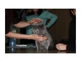 Название: IMG_4988 Фотоальбом: выставка кошек 29.11.2009 Категория: Животные  Время съемки/редактирования: 2009:11:29 16:36:55 Фотокамера: Canon - Canon EOS 1000D Диафрагма: f/5.6 Выдержка: 1/60 Фокусное расстояние: 50/1 Светочуствительность: 400   Просмотров: 487 Комментариев: 0