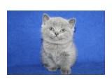Название: кошка 2 Фотоальбом: котята Категория: Животные  Время съемки/редактирования: 2012:04:15 15:44:52 Фотокамера: Canon - Canon EOS 1000D Диафрагма: f/4.0 Выдержка: 1/60 Фокусное расстояние: 27/1    Просмотров: 392 Комментариев: 0