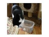 Игрушка для кошек В крышке контейнера дырки. Игрушки внутри. Кошкам занятие и забава :)))  Просмотров: 407 Комментариев: 0