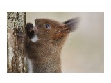 Охота на белку )) 2 Фотограф: VictorV  Просмотров: 438 Комментариев: 3