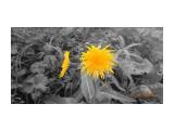 Цветы запоздалые...  Просмотров: 178 Комментариев: 0