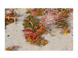 Травочки прибрежные... Фотограф: vikirin  Просмотров: 1299 Комментариев: 0