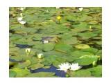 На озере Фотограф: фотохроник  Просмотров: 472 Комментариев: 0