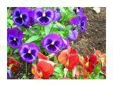 От фиолетового к красному Фотограф: vikirin  Просмотров: 1175 Комментариев: 0
