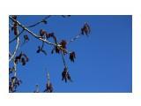 Тополь цветет... Фотограф: vikirin  Просмотров: 2489 Комментариев: 0