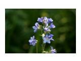 DSC03160 Фотограф: vikirin  Просмотров: 393 Комментариев: 0