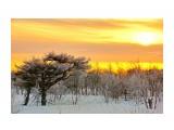 Название: Утро Фотоальбом: Фирсово 19 января 2014 Категория: Природа Фотограф: В.Дейкин  Просмотров: 1651 Комментариев: 1
