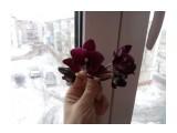 IMG_20170322_125725  Просмотров: 32 Комментариев: 0