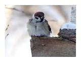 Название: DSC01241_1 Фотоальбом: Птицы Категория: Животные  Время съемки/редактирования: 2017:11:19 10:28:38 Фотокамера: SONY - DSC-HX300 Диафрагма: f/6.3 Выдержка: 1/250 Фокусное расстояние: 21500/100    Просмотров: 28 Комментариев: 0