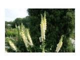 Владивосток. Ботанический сад Фотограф: vikirin  Просмотров: 670 Комментариев: 0