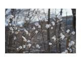 Название: DSC07869 Фотоальбом: Зима... Категория: Природа Фотограф: VictorV  Время съемки/редактирования: 2021:03:03 19:41:04 Фотокамера: SONY - SLT-A99 Диафрагма: f/5.0 Выдержка: 1/2000 Фокусное расстояние: 900/10    Просмотров: 104 Комментариев: 0