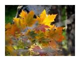 Цветы, деревья и травы  DSC02605_н   Просмотров: 137  Комментариев: 0
