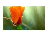 Название: Утренняя роза... Фотоальбом: Цветы Категория: Макросъёмка  Просмотров: 39 Комментариев: 0