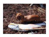 Название: Таймень. Фотоальбом: Рыбалка Категория: Природа  Просмотров: 519 Комментариев: 1