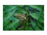 DSC05209 Фотограф: vikirin  Просмотров: 1391 Комментариев: 0
