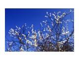весна идёт!  Просмотров: 1732 Комментариев: 0