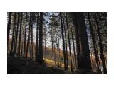 Название: на склоне Фотоальбом: на горном воздухе Категория: Природа  Время съемки/редактирования: 2015:10:17 09:35:18 Фотокамера: Canon - Canon EOS 6D Диафрагма: f/16.0 Выдержка: 1/40 Фокусное расстояние: 24/1    Просмотров: 1140 Комментариев: 1