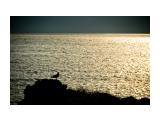 провожая солнце /  Янкито  Фотограф: ©  marka /печать больших фотографий,создание слайд-шоу на DVD/  Просмотров: 889 Комментариев: 0