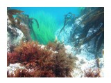 Название: Подводный ланшафт Фотоальбом: Виды и добыча подводной охоты. Лето 2013г. Категория: Природа Фотограф: Тимофеев И.В.  Время съемки/редактирования: 2007:01:06 03:49:19 Фотокамера: Canon - Canon PowerShot A570 IS Диафрагма: f/2.6 Выдержка: 1/250 Фокусное расстояние: 5800/1000    Просмотров: 520 Комментариев: 0
