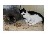 tasya: Кошки спят.