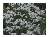 Название: 100_0614 Фотоальбом: мамины  цветочки Категория: Цветы  Время съемки/редактирования: 2012:07:22 18:53:23 Фотокамера: EASTMAN KODAK COMPANY - KODAK EASYSHARE Camera, M532 Диафрагма: f/6.0 Выдержка: 1/60 Фокусное расстояние: 139/10    Просмотров: 429 Комментариев: 0