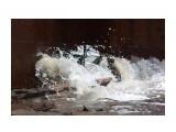 Название: Волны бьют сквозь прогнившую баржу... Фотоальбом: 2011 08 Хоэ. Категория: Природа  Время съемки/редактирования: 2011:08:20 23:10:19 Фотокамера: Canon - Canon EOS Kiss X3 Диафрагма: f/13.0 Выдержка: 1/1250 Фокусное расстояние: 250/1 Светочуствительность: 1600   Просмотров: 3833 Комментариев: 0