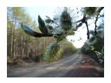 Ива, начало большой жизни! Фотограф: viktorb Район 2 Пади, о. Сахалин!  Просмотров: 1344 Комментариев: 0