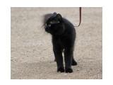 Название: Кот Фотоальбом: кошки Категория: Животные  Время съемки/редактирования: 2016:07:13 16:32:54 Фотокамера: Canon - Canon EOS 550D Диафрагма: f/5.0 Выдержка: 1/250 Фокусное расстояние: 170/1    Просмотров: 451 Комментариев: 0