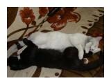 спят усталые котятки...  Просмотров: 2093 Комментариев: