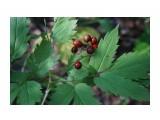 DSC03768 Фотограф: vikirin  Просмотров: 586 Комментариев: 0