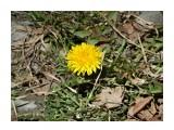 Название: Первый одуванчик Фотоальбом: Цветы Категория: Цветы  Время съемки/редактирования: 2017:04:17 14:01:32 Фотокамера: SONY - DSC-HX300 Диафрагма: f/6.3 Выдержка: 1/320 Фокусное расстояние: 21453/100    Просмотров: 19 Комментариев: 1
