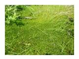 Природа Сахалина. Зеленый мир, болотные мхи!  Фотограф: viktorb Окр. Южно-Сахалинска!  Просмотров: 1255 Комментариев: 0