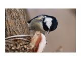 Название: _DSC4044 Фотоальбом: Птички Категория: Животные Фотограф: VictorV  Время съемки/редактирования: 2020:03:08 12:41:02 Фотокамера: SONY - DSLR-A900 Диафрагма: f/6.3 Выдержка: 1/1250 Фокусное расстояние: 6000/10    Просмотров: 392 Комментариев: 0